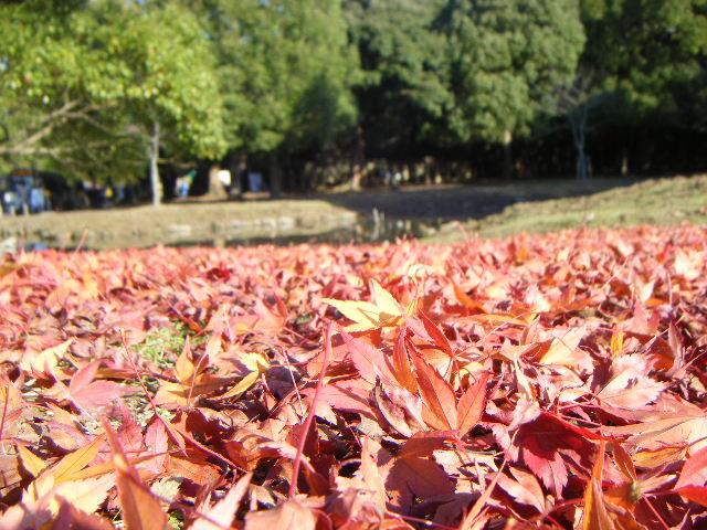 飛火野 紅葉