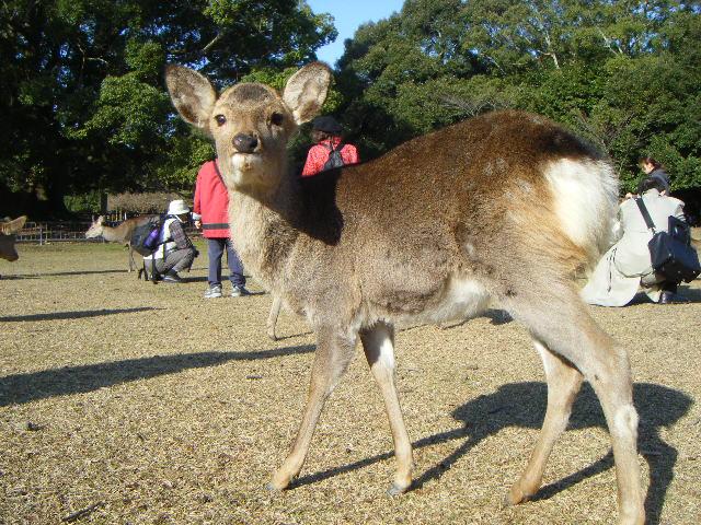 鹿ですが何か