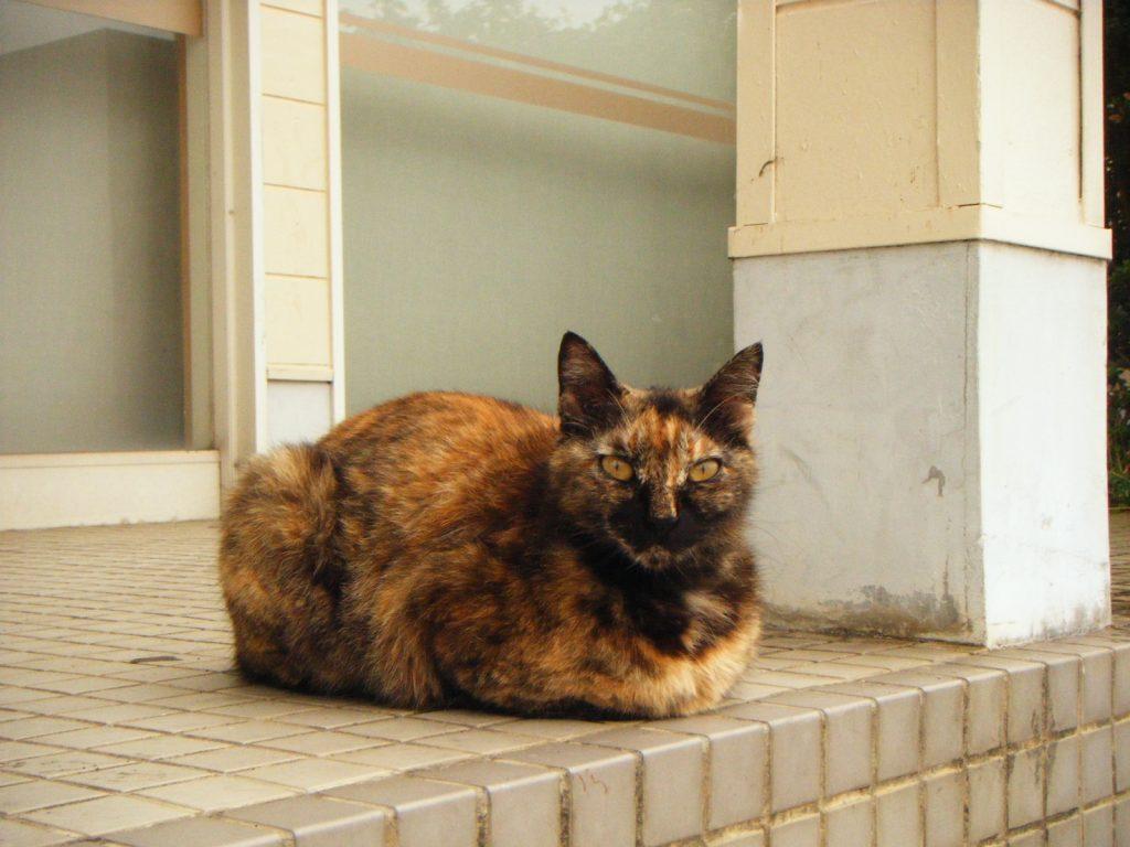 阿波川島駅にいた野良猫