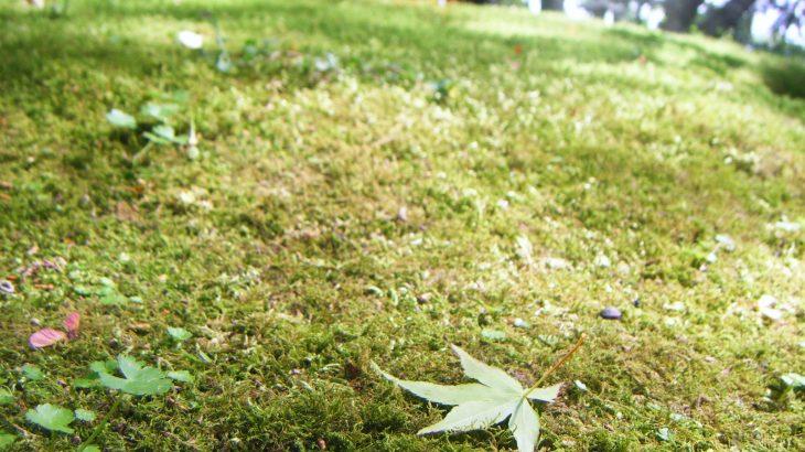 竹林寺 苔のじゅうたん