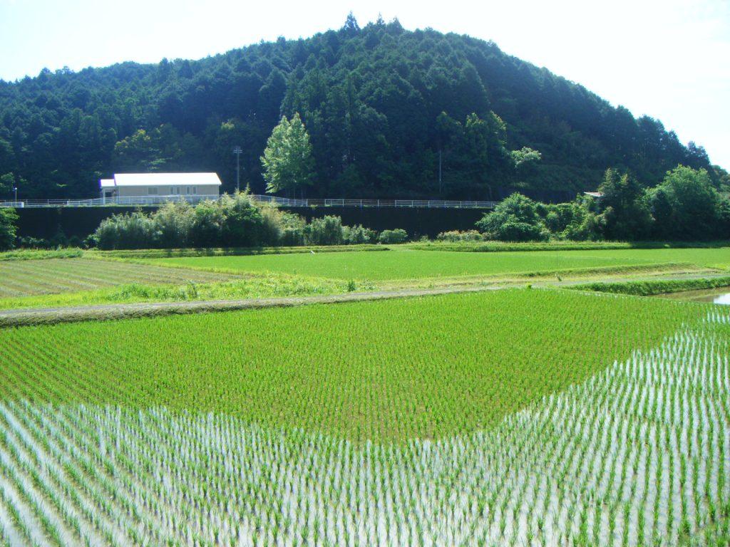 39番延光寺への道