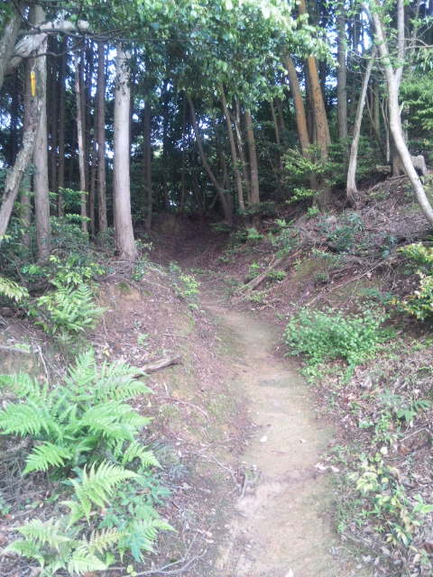 41番龍光寺への道
