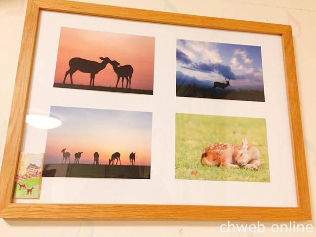 奈良の鹿愛護会 鹿ポストカード