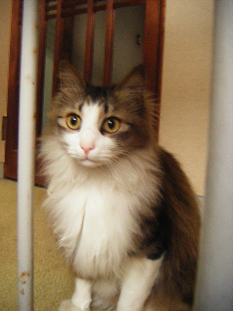 若松屋別館の猫ちゃん
