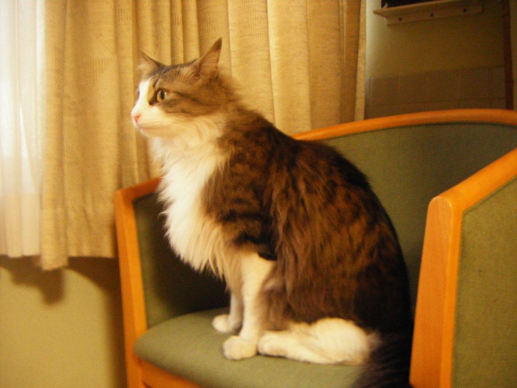客室に来る猫