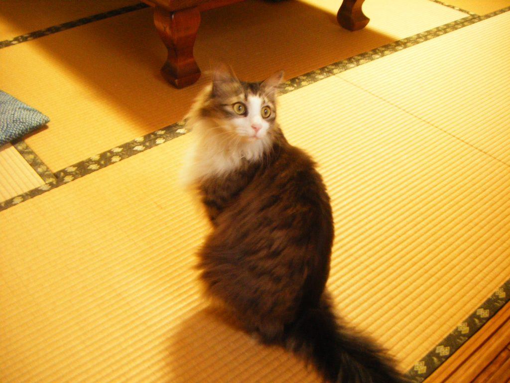 猫が客室に来ました