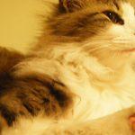 四国88箇所巡礼 女一人歩き遍路の旅 20日目・猫がいる旅館 若松屋別館